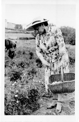 Helena Rubinstein picking flowers at her villa in Grasse, France