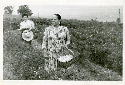 Helena Rubinstein picking flowers in Grasse, France